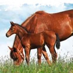 Momo-Aktiv für Pferde